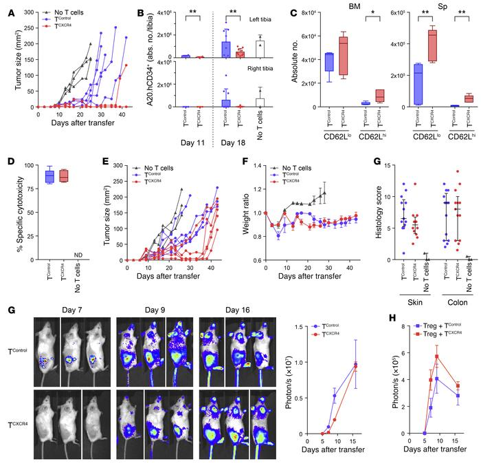 TCXCR4 demonstrate enhanced tumor protection. All mice underwent B6→BALB...