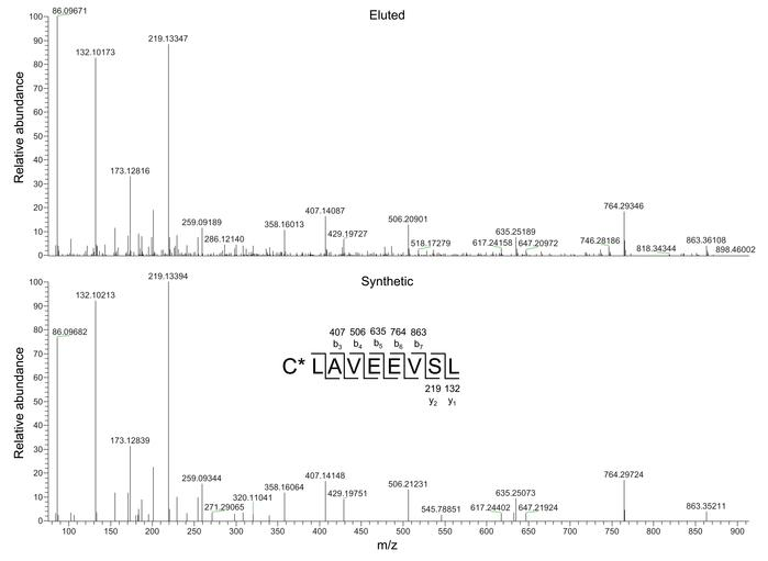 Validation of C*LAVEEVSL as peptide eluted from HLA-A*02:01–positive AML...
