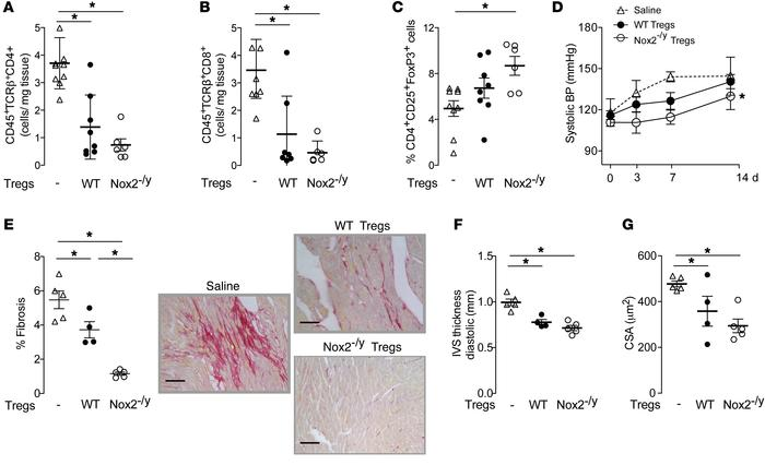 Effect of adoptive transfer of Nox2-deficient or WT Tregs on the respons...