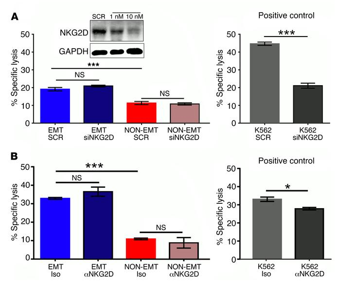 NKG2D receptor is not involved in EMT-induced susceptibility to NK-media...