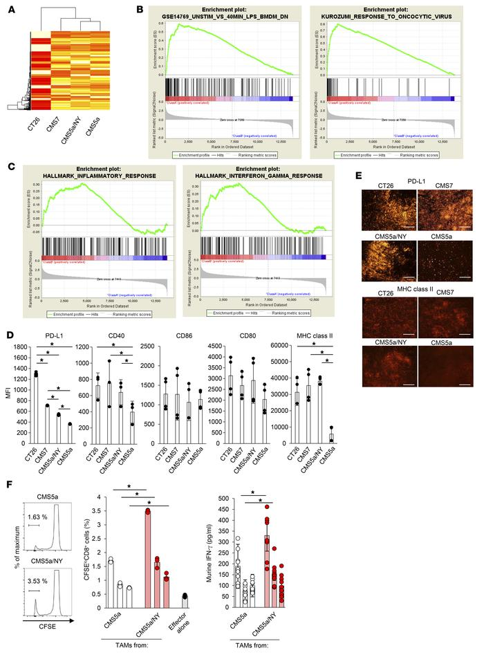 TAMs remain inactive in the resistant CMS5a tumor. (A) Tumor tissue from...