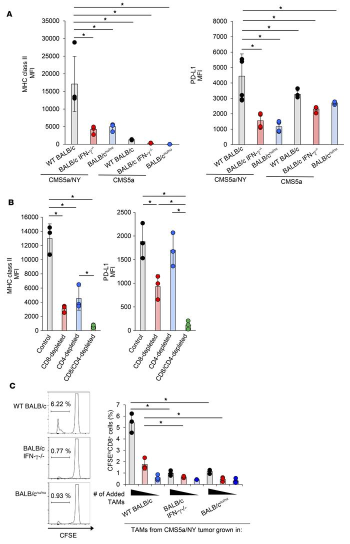 TAM activation in sensitive tumors is dependent on IFN-γ signaling and T...