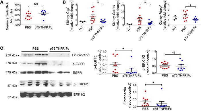 Blockade of TNF-α signaling ameliorated overexpression of profibrotic fa...
