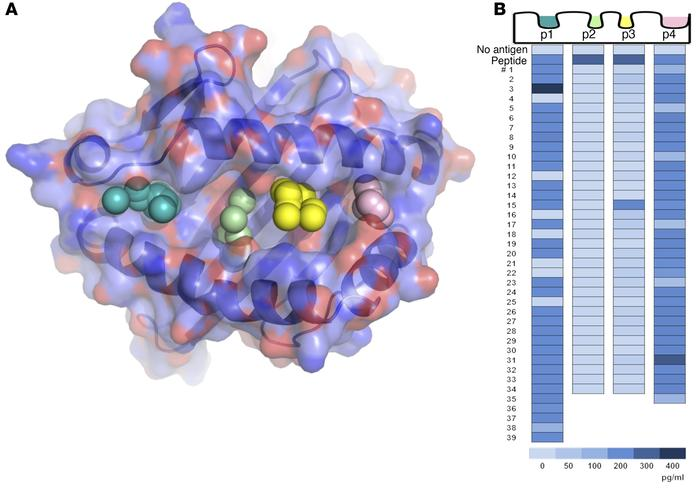 In silico screening of a small-molecule library by molecular docking to ...