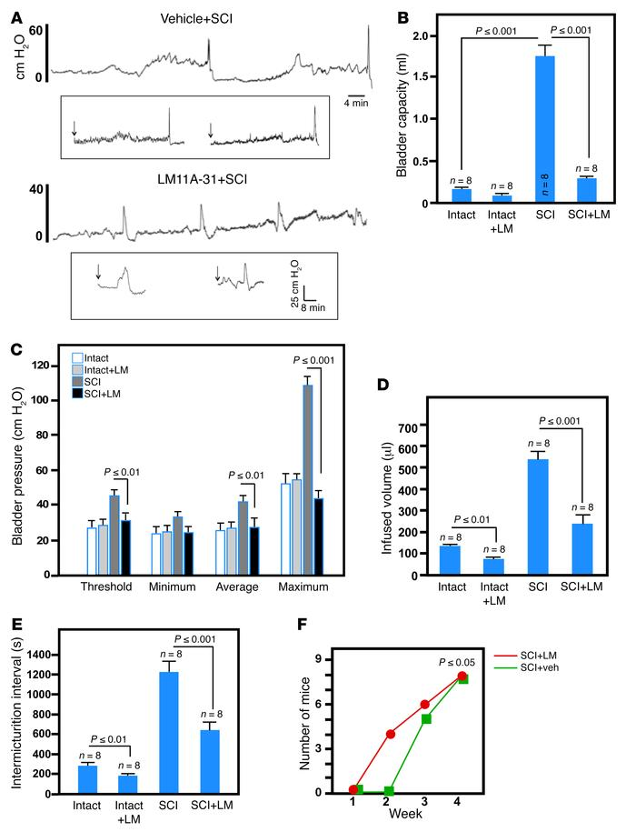 Systemic LM11A-31 greatly improves bladder function after SCI in mice. (...