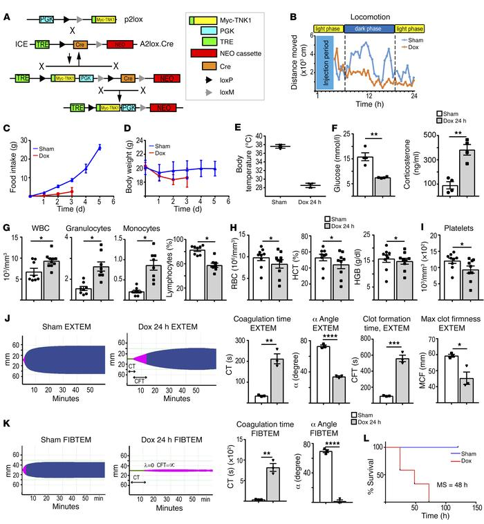 Expression of TNK1 causes animal distress, systemic inflammation, and ra...