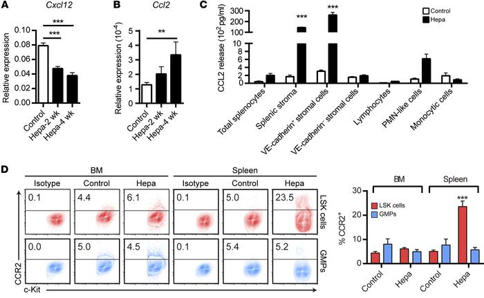 Enhanced CCL2/CCR2 signaling in the spleens of Hepa mice. (A and B) Sple...
