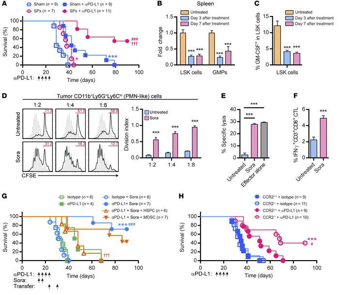 Abrogation of splenic EMH synergistically enhances anti–PD-L1 efficacy. ...