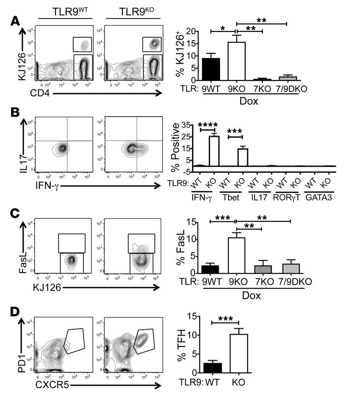TLR9-deficiency promotes development of Th1 and TFH cells. sdLN suspensi...
