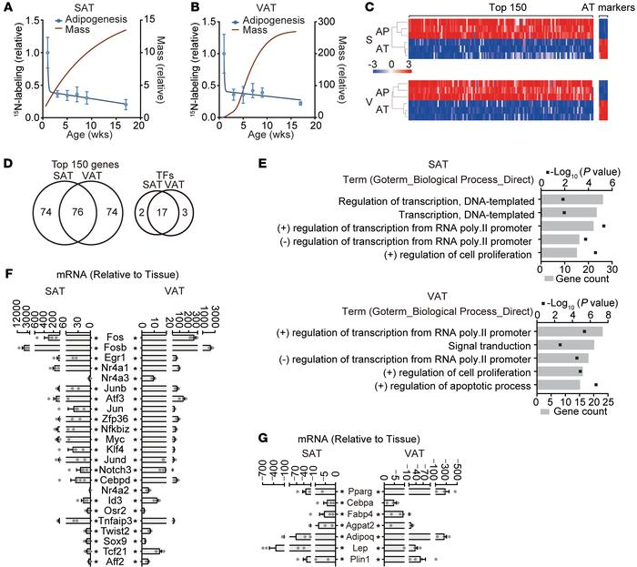 Identification of candidate transcriptional regulators of AP function. (...