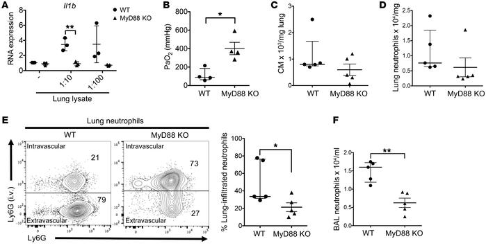 MyD88 expression by graft-infiltrating monocytes is essential for neutro...