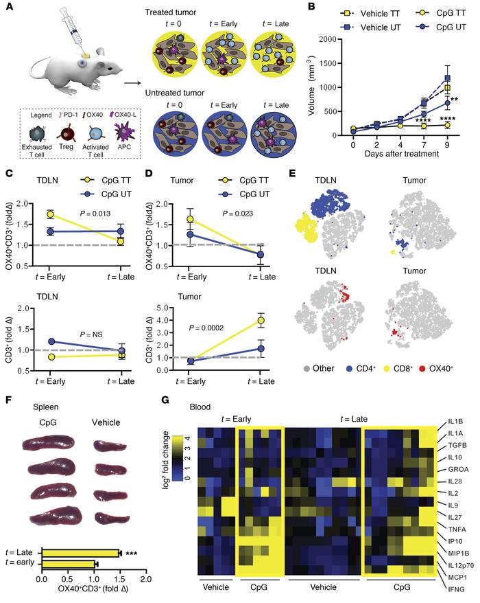 JCI - Imaging activated T cells predicts response to cancer