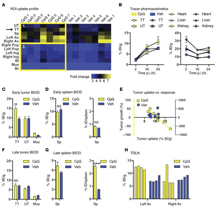 JCI - Imaging activated T cells predicts response to cancer vaccines