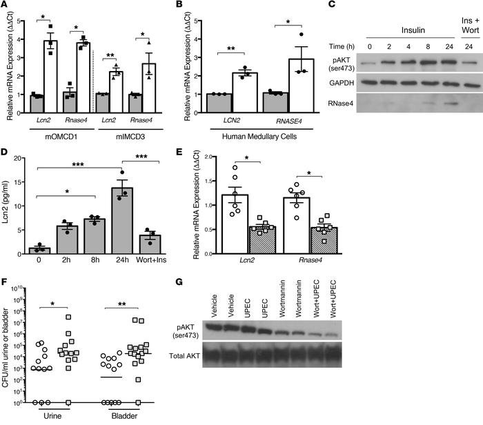 Insulin-mediated PI3K/AKT activation regulates AMP expression. (A and B)...