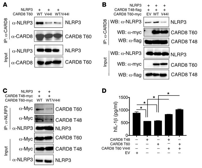 Mutant CARD8 exerts a dominant-negative effect on the NLRP3 inflammasome...
