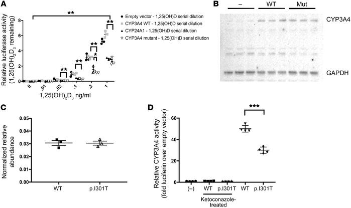CYP3A4 (p.I301T) mutant has increased vitamin D degradative activity but...