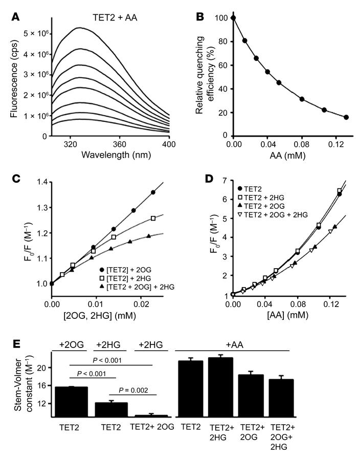 Fluorescence quenching of recombinant TET-2 protein is unaffected by L2H...