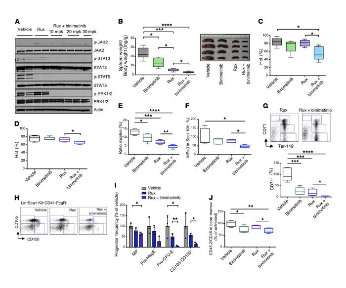 Combined JAK2 and MEK inhibition provides superior therapeutic efficacy ...