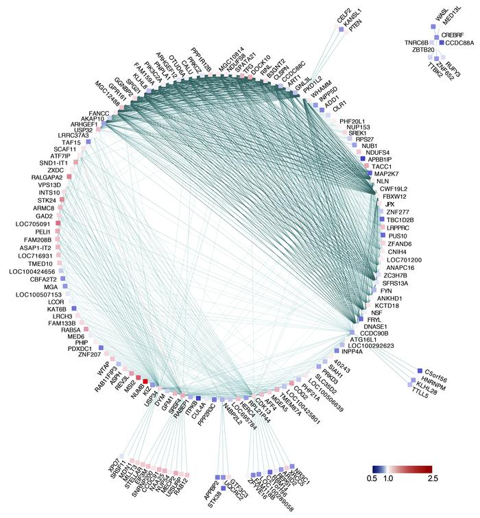Visualization of the brown gene module. Visualization of the gene coexpr...