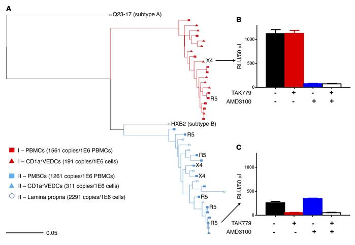 CD1a+ VEDCs are infected in vivo. (A) Maximum likelihood phylogenetic tr...