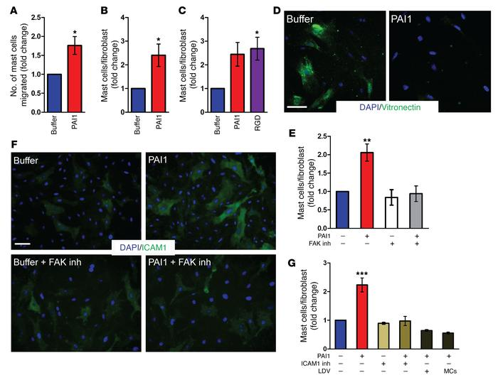 PAI1 mediates mast cell infiltration and increased fibroblast mast cell ...