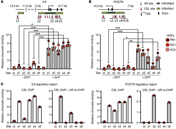 AR and CSL converge on negative control of CAF effector genes. (A) Top: ...