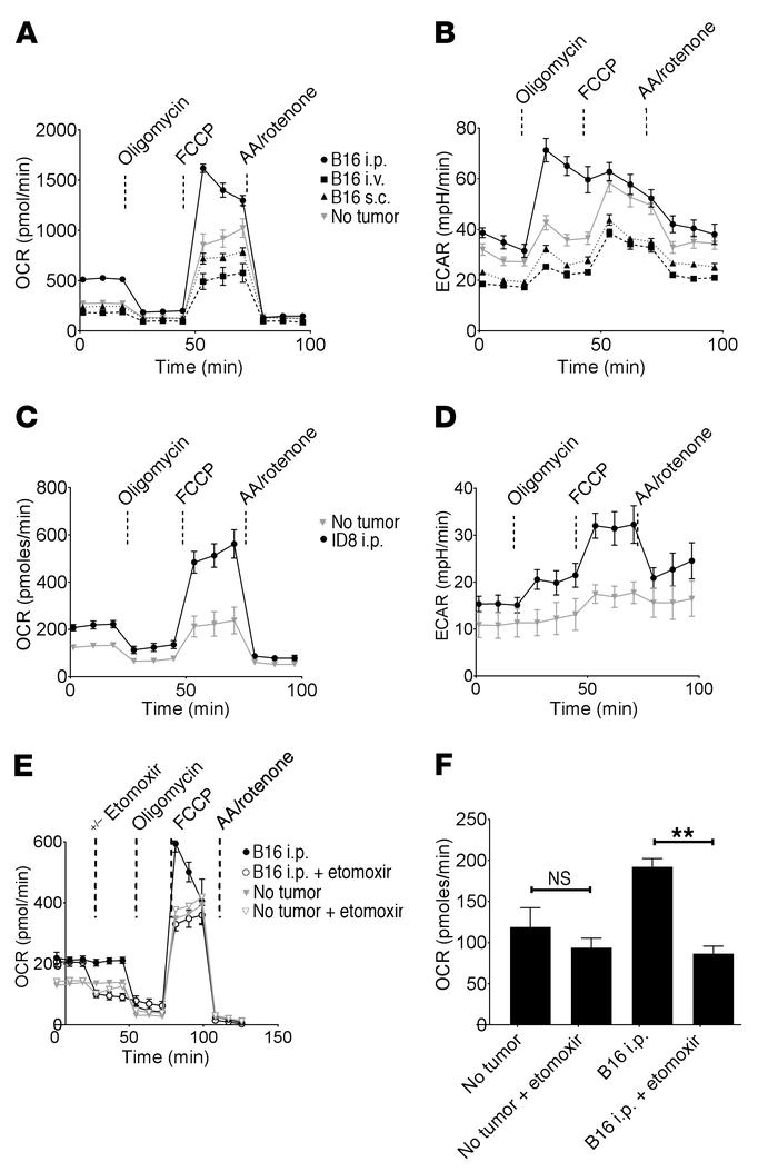 Tumors increase oxidative and glycolytic metabolism in pResMϕ. Extracell...