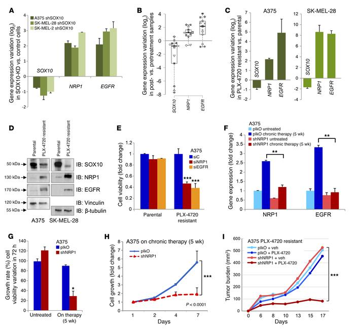 Adaptive NRP1 neoexpression in BRAF-addicted melanoma cells mediates acq...