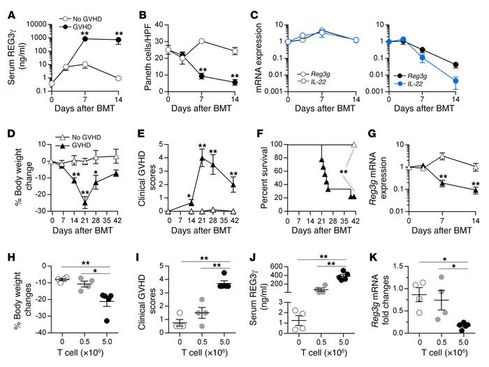 Time course of REG3γ and IL-22 expression during GVHD. (A–C) B6D2F1 mice...