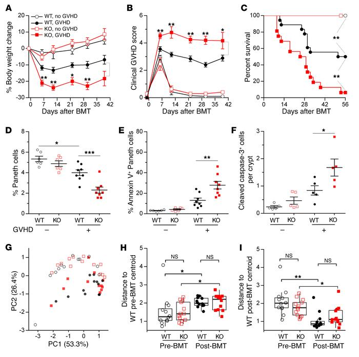 REG3γ absence increases GVHD severity. WT B6 and B6-Reg3g–/– (KO) mice u...