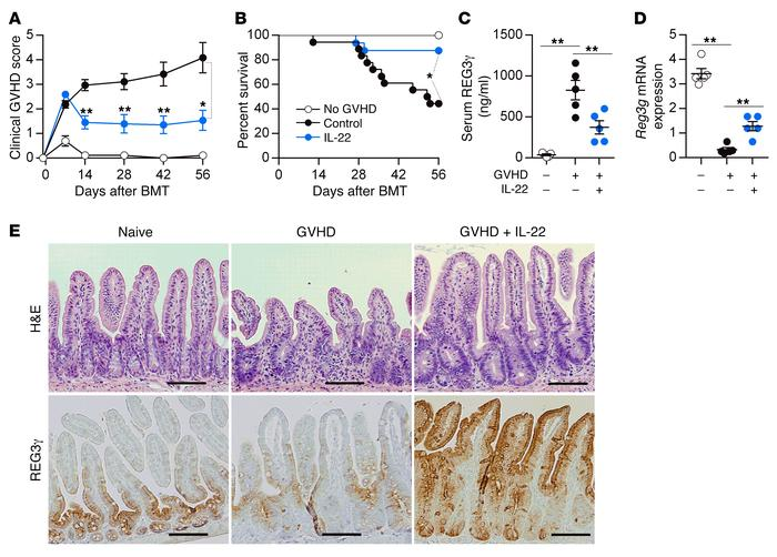 Prophylactic administration of IL-22 reduces GVHD. B6D2F1 mice received ...