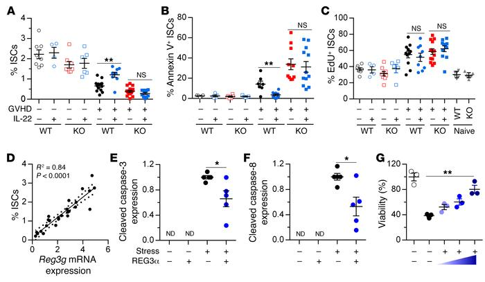 REG3γ protects ISCs from apoptosis. (A–D) WT B6 and B6-Reg3g–/– (KO) mic...