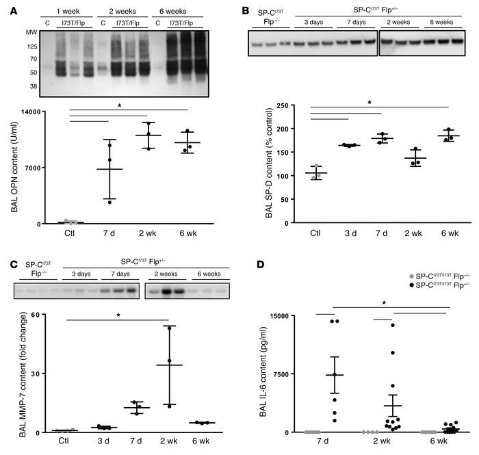 IER-SP-CI73TFlp mice express IPF biomarkers. Western blotting of BALF (2...