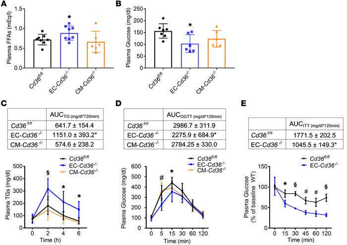 EC-Cd36–/– mice have increased FFA and postprandial TG levels but improv...