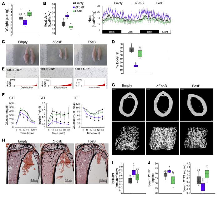 AP1 antagonism in AgRP neurons increases energy expenditure and bone den...