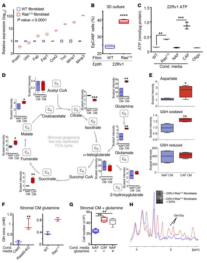 Ras activation in CAF drives glutamine metabolism in epithelia. (A) Rela...