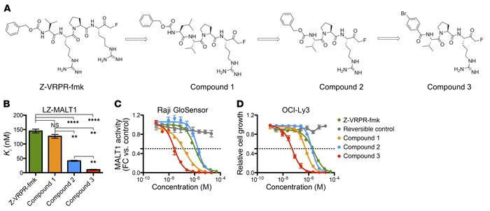 Compound 3 shows maximal inhibition of MALT1 activity in in vitro and ce...