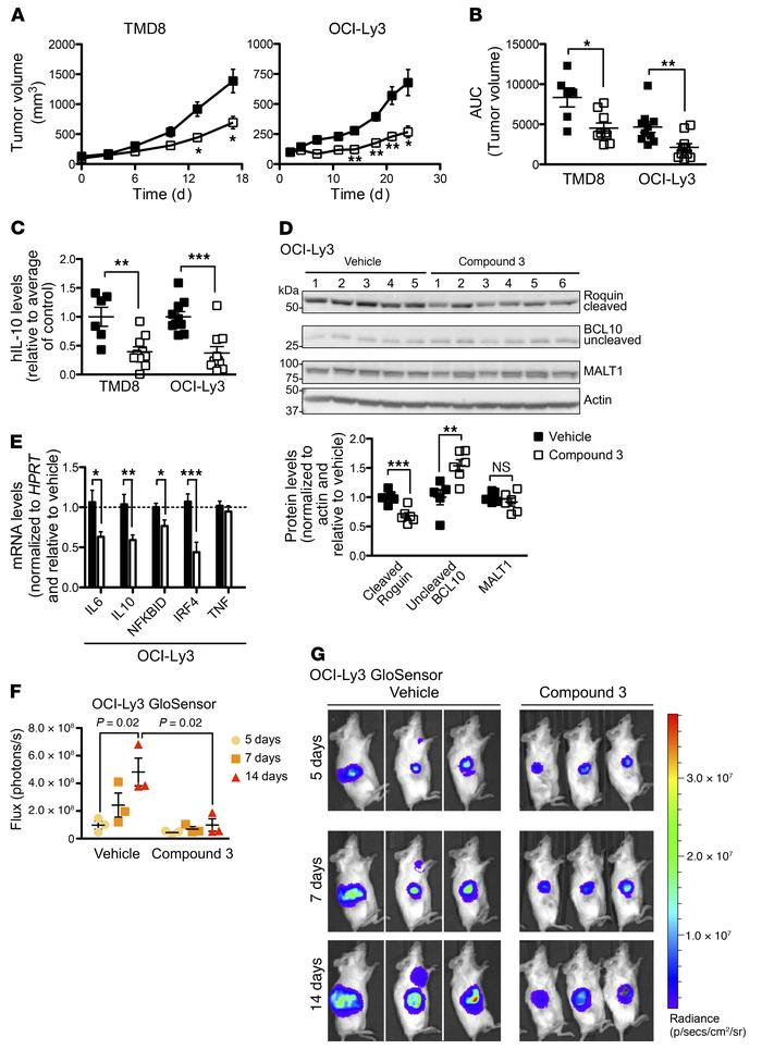 Compound 3 suppresses the growth of ABC DLBCL tumors in vivo. (A) Tumor ...