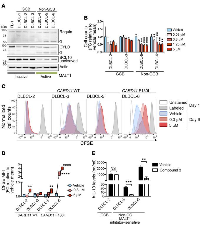Compound 3 suppresses the growth of DLBCL PDXs ex vivo. (A) Western blot...