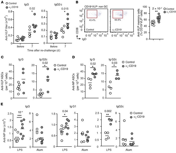 Loss of αv affects long-lived antibody responses. (A) Serum anti-VLP IgG...