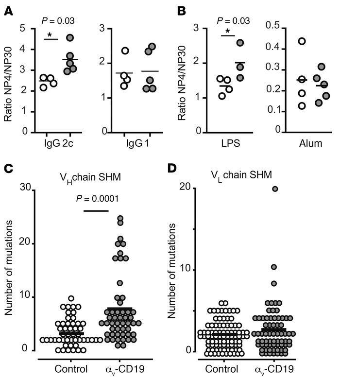 Deletion of αv promotes SHM and affinity maturation of antibodies. (A an...