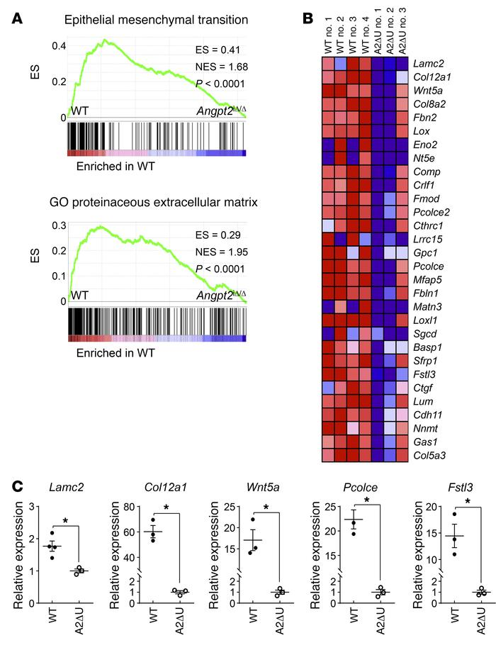 Genetic depletion of Angpt2 mitigates expression of EndoMT-related genes...