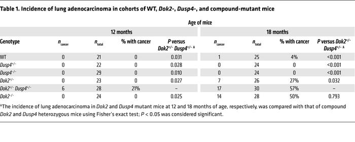 Incidence of lung adenocarcinoma in cohorts of WT, Dok2-, Dusp4-, and co...