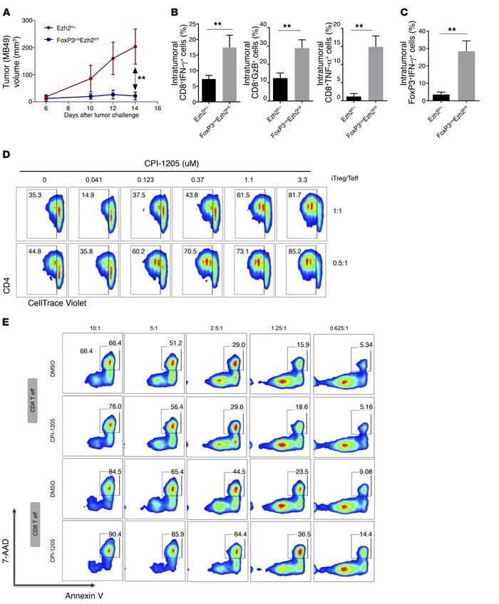 EZH2 inhibition by CPI-1205 enhances T cell–mediated antitumor immunity....