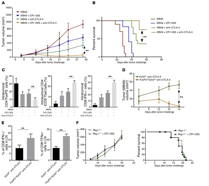 Blocking expression of EZH2 mediated by anti–CTLA-4 using CPI-1205 incre...