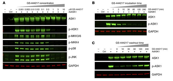 GS-444217 dose-dependently inhibits ASK1 activity. ASK1 inhibition assay...
