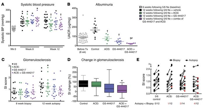 GS-444217 increases the efficacy of enalapril in a chronic glomerular in...