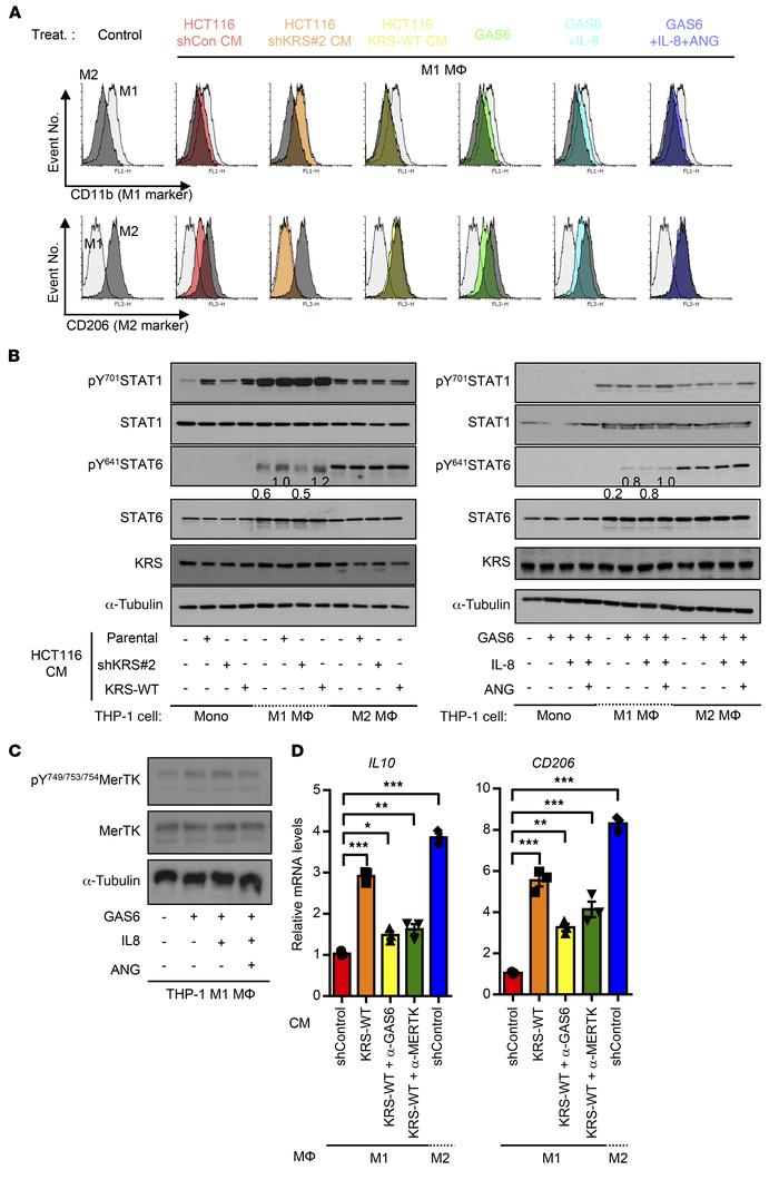 KRS-mediated GAS6/IL-8/ANG expression for the M2 macrophages polarizatio...