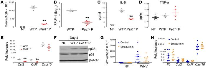 Peli1 promotes p38MAPK activation in microglia via facilitation of WNV r...